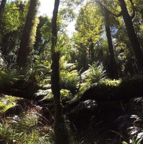 Native New Zealand Bush